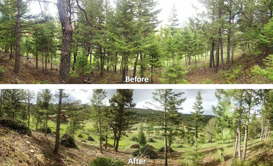 thinning-before-and-after